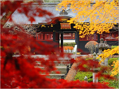 11.Autumn leaves(Hall of worship)
