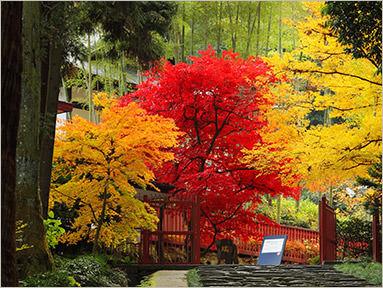 12.Autumn 잎 (앞의 접근)